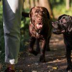 Displasia coxofemoral em cães: o que é e como tratar